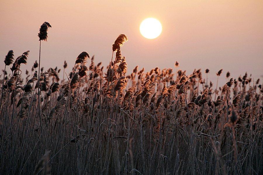 Флора Астраханский заповедник растения